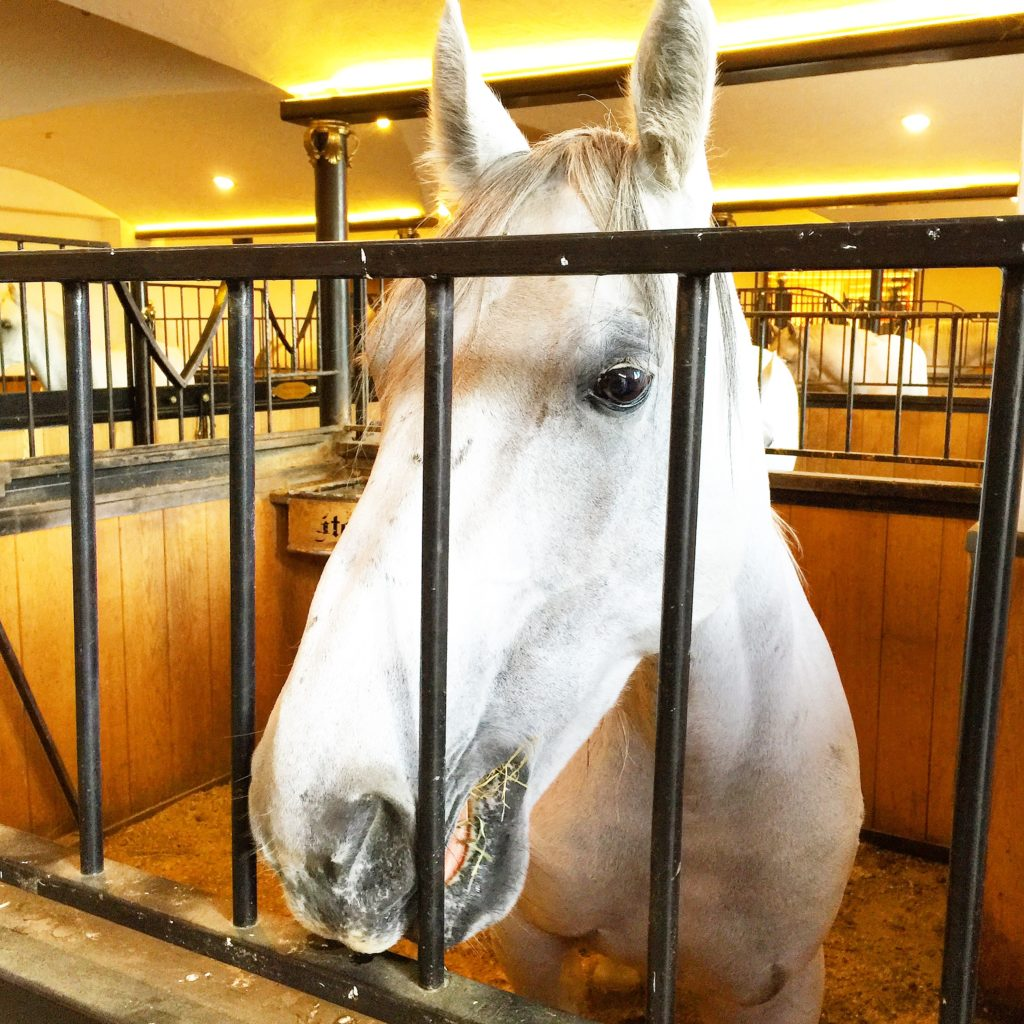 "Lipizzaner horses - well known for reproducing ""haute école"" movements"